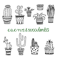 Hand drawn succulent and cactuse set doodle vector