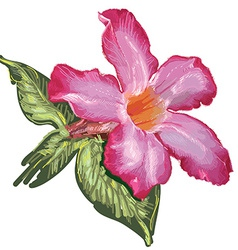 Adenium desert rose flower and leaves sketch on a vector