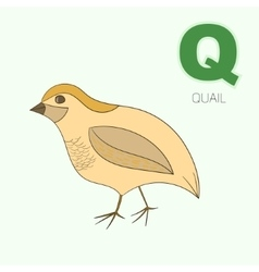 Alphabet letter q quail children vector