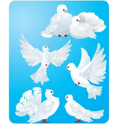 Set of white pigeons vector
