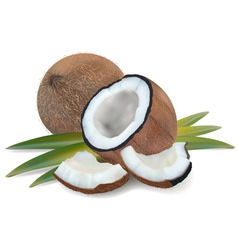 Coconut with leaves vector