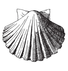 Exterior scallop shell was used as a water basin vector