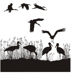 storks in peat vector image