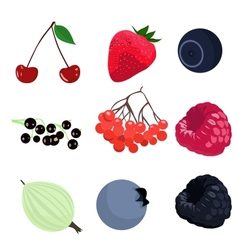 set of berries vector image