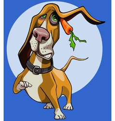 Cartoon funny dog basset hound with carrot vector