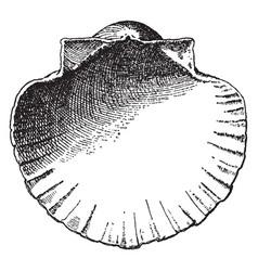 Interior scallop shell have a decorative vector
