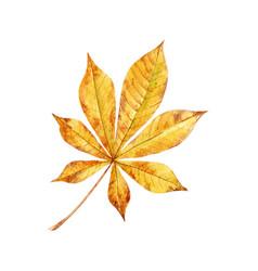 Watercolor fall leaves set vector