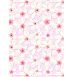 White frangipani flowers on a pink background vector