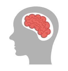 brain storm human organ icon vector image