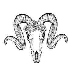 Hand drawn goat skull with roses doodle dotwork vector