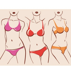 beautiful woman bodies in bikini vector image