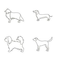 Collie dachshund labrador pikinesedog breeds vector
