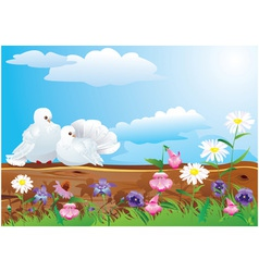 white pigeons with summer vector image