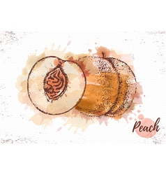Watercolor peach sketch fresh fruit vector