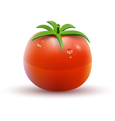Red tomato isolated on white background vector