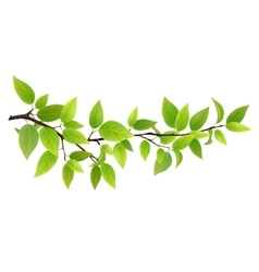 Small tree branch with green leaves vector