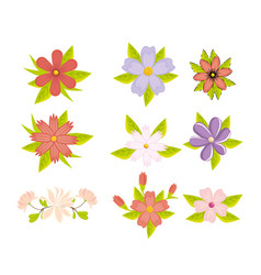 beautiful colorful flowers design vector image