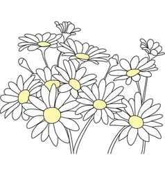 Daisies Outline vector image vector image