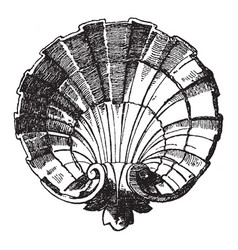 Scallop design shell was designed by sculptor vector