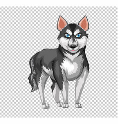 Siberian husky dog on transparent background vector