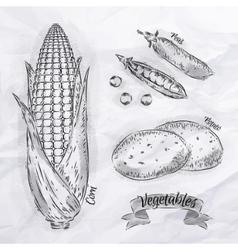 Vegetables corn peas potatoes vintage vector image vector image