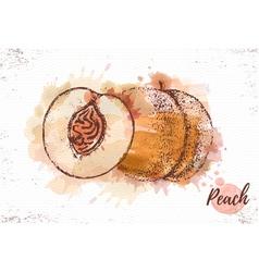 Watercolor peach sketch fresh fruit vector