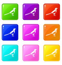 bird magpie icons 9 set vector image
