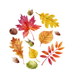 Watercolor fall leaves set vector