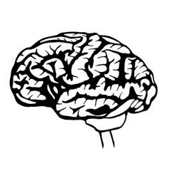 Sketch brain vector