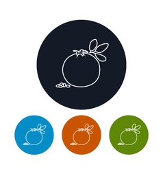 Icon pomegranate in the contours vector