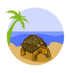 Turtle on the beach vector
