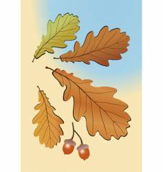 Autumn oak leaves vector