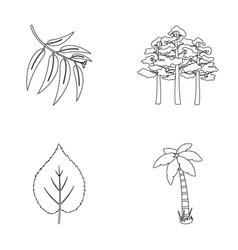 Branch zucalyptus pine leaf palmforest set vector