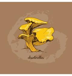 Chanterelles vector