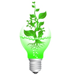 plant and bulb vector image