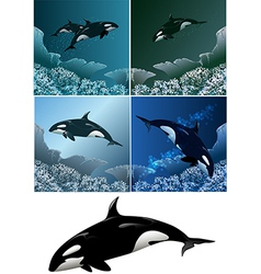 killer whale set vector image
