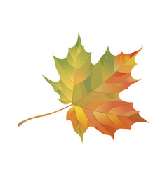 autumn maple leaf isolated on white background vector image vector image