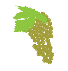 Isolated grapes fruit vector