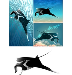 Manta ray set vector