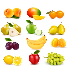 Big group of different fruit vector