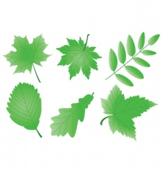 editable green leaves vector