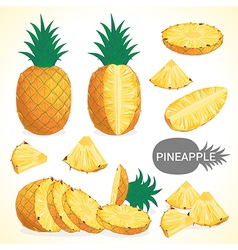 Set of pineapple fruit in various styles vector