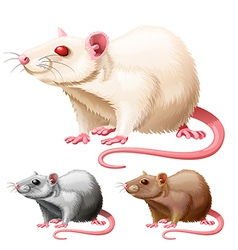 lab rat vector image vector image