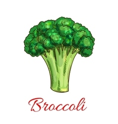 Broccoli vegetarian vegetable sketch icon vector