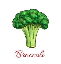 Broccoli vegetarian vegetable sketch icon vector image vector image