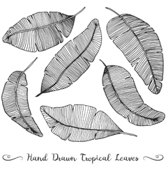 Six different hand drawn banana leaves vector