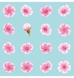 Sakura flowers icon set isolated EPS 10 vector image