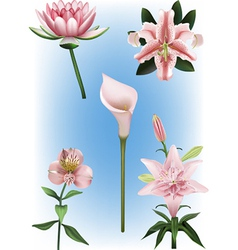 Collection of lily vector