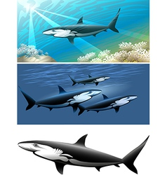 Shark set vector