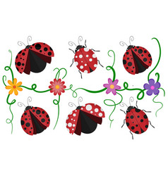 Ladybirds pattern vector